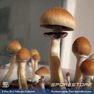 B+ Spores (B Plus Spores)